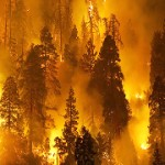 UTTARAKHAND FOREST DEPARTMENT DEPLOYS THREE DRONES FOR REAL TIME MONITORING OF FOREST FIRES